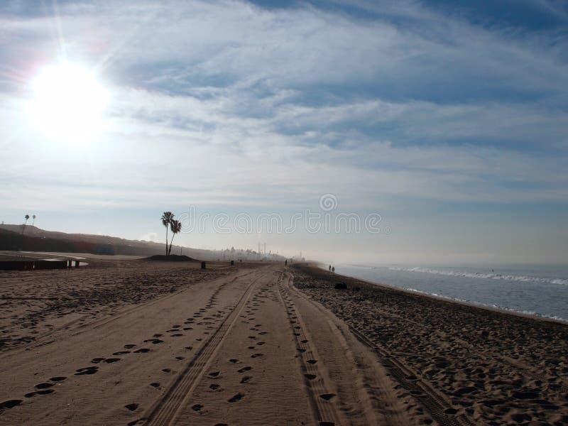 Trötta spår och fotspår i sanden med palmträd och driva royaltyfri foto