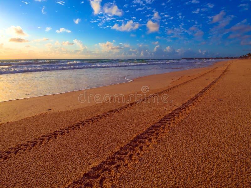 Trötta spårar på stranden royaltyfri bild