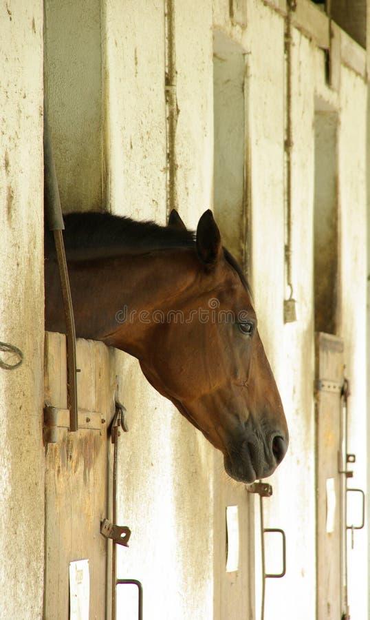 tröttad häst arkivfoto
