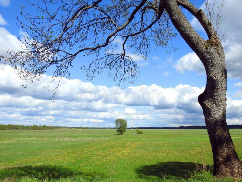Tr?d, f?lt och h?rlig molnig himmel, Litauen royaltyfria bilder