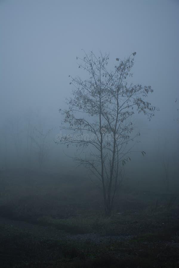 Tr?d i tjock dimma J?rnv?g f?r tjock dimma arkivfoto