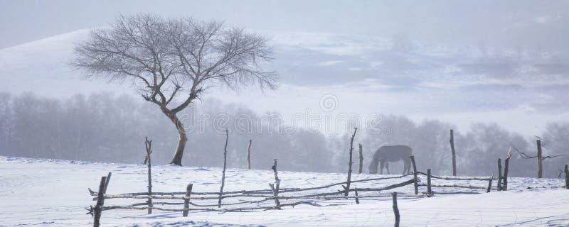 Tr?det i sn?n royaltyfri bild