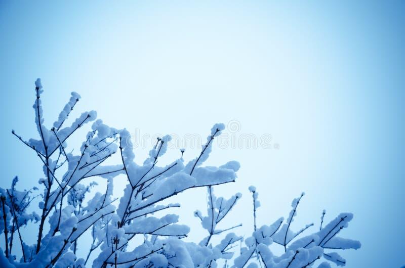 Tr?dfilialer i sn?n Bild med copyspace royaltyfri fotografi