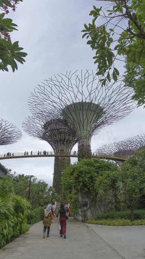 Tr?dg?rd vid fj?rden i singapore royaltyfria bilder