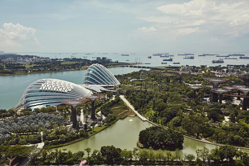 Tr?dg?rdar vid fj?rden fr?n ?ver in Singapore arkivfoto