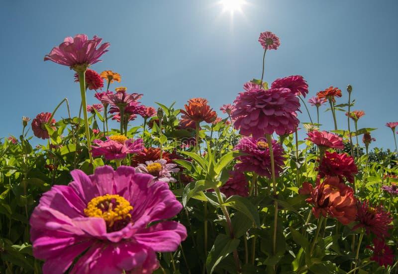 Tr?dg?rden blommar under solen arkivfoto