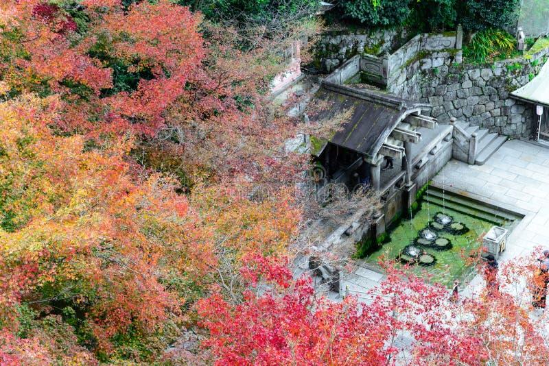 tr?dg?rden f?r l?nn f?r h?rlig Momiji h?st den f?rgrika p? den Kiyomizu-Dera templet med Kyoto stadsbakgrund, Japan arkivbild