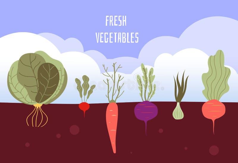 tr?dg?rds- gr?nsak Organiska och sunda matveggies som arbeta i trädgården sommargrönsaker med, rotar i jordvektorbakgrund royaltyfri illustrationer