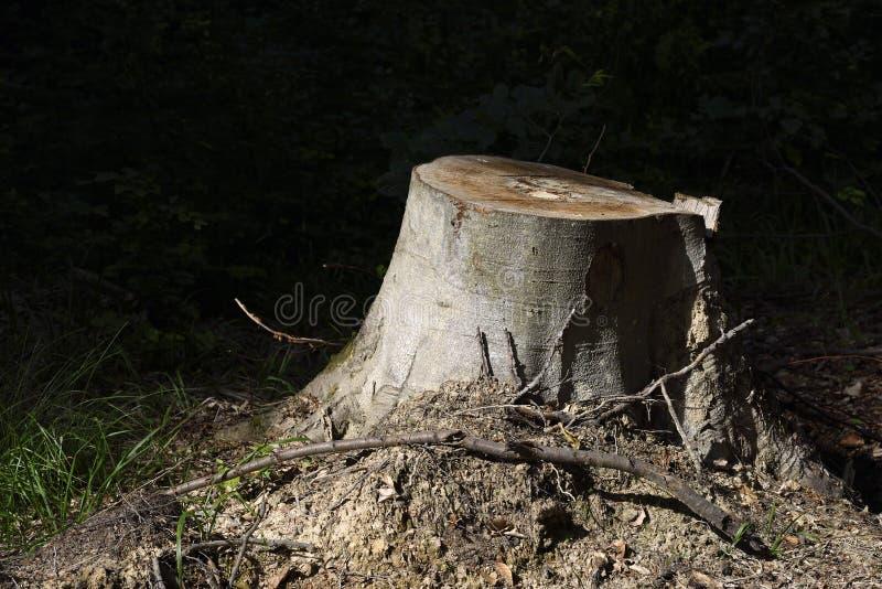 Tr?dstubbe i skogen arkivfoto