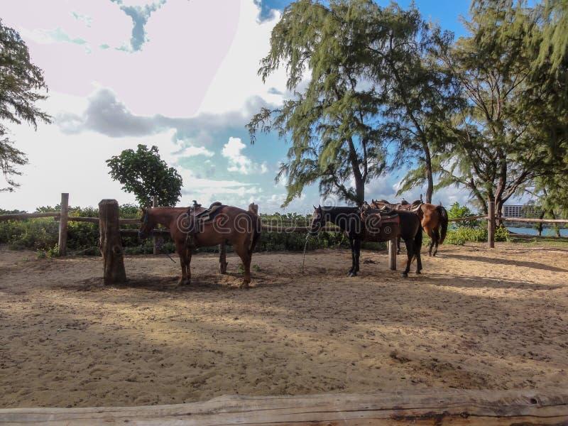 Três cavalos na cerca imagens de stock