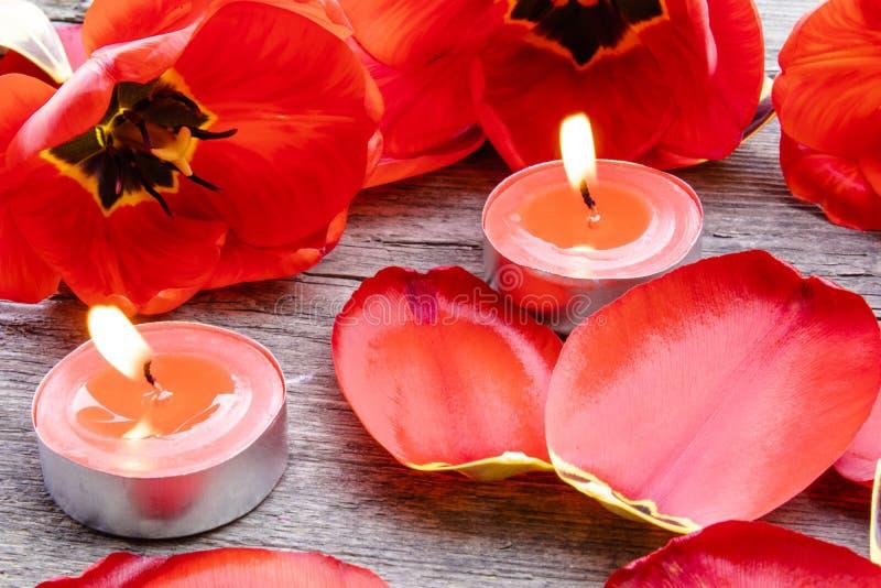 Tr?s velas vermelhas est?o queimando-se perto das tulipas e das p?talas ca?das Vela ardente vermelha imagens de stock