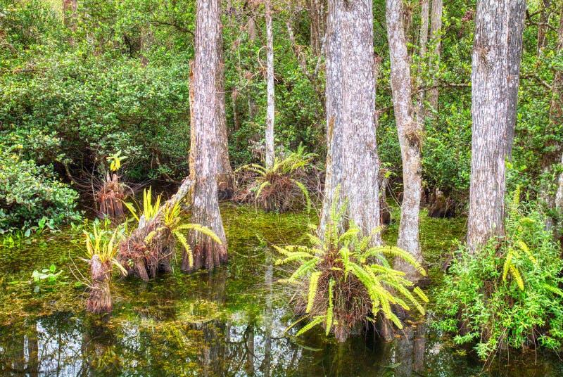 Tr?sk i den nationella sylten f?r stor cypress, Florida, F?renta staterna arkivfoton