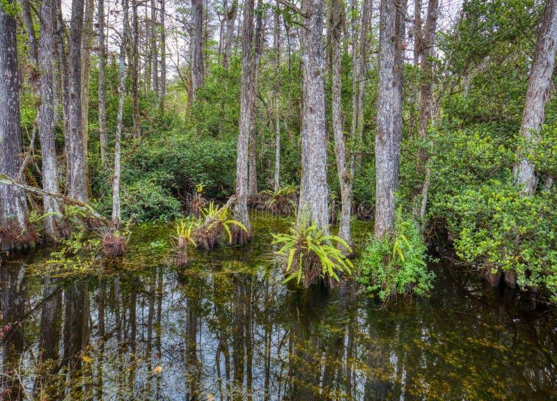 Tr?sk i den nationella sylten f?r stor cypress, Florida, F?renta staterna arkivbilder