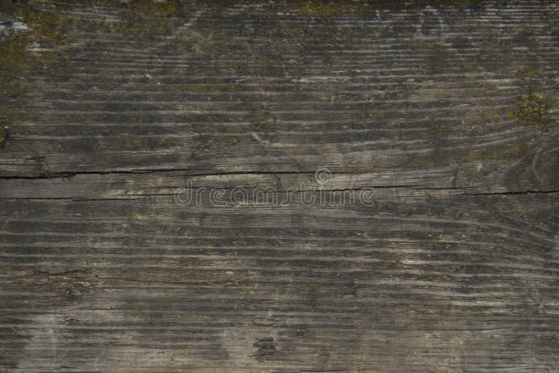 Tr? texturera bakgrund Gammal tr royaltyfria foton
