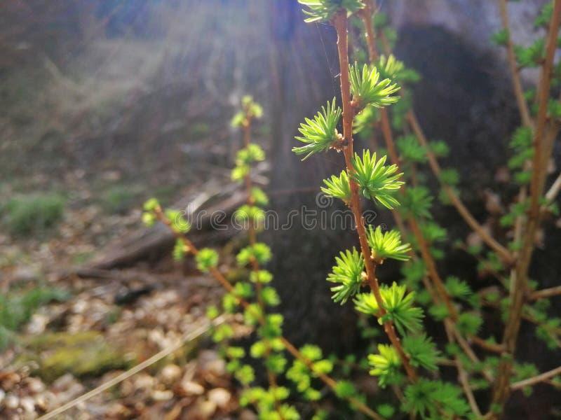 Tr?umerischer Wald stockfotografie
