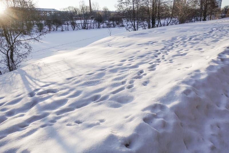Trações e pegadas da neve na neve Dia ensolarado Fundo do inverno fotografia de stock