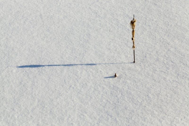 Trações profundas da neve fotografia de stock royalty free