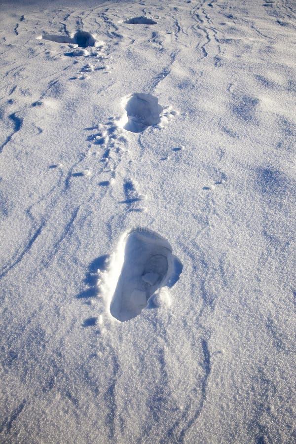 Trações profundas da neve imagens de stock