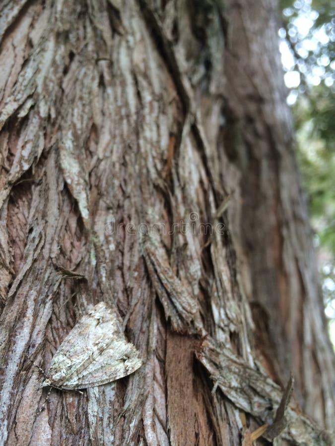 Traça na casca de árvore imagens de stock