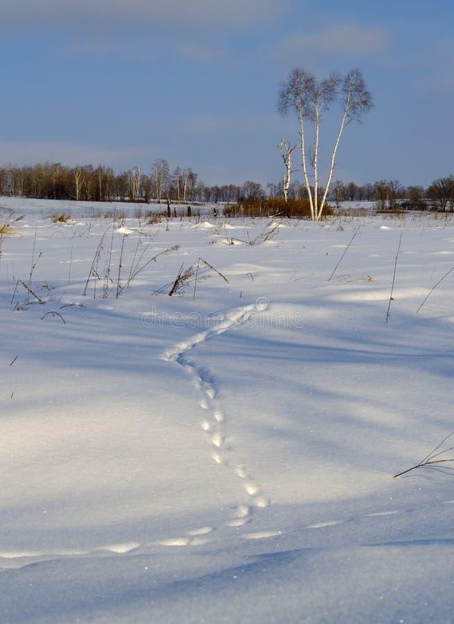 Traço animal na neve fotos de stock royalty free