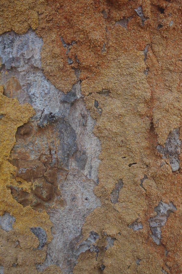 Traços da térmita na casca de um trree fotografia de stock