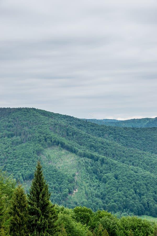 Traços de desflorestamento nos montes fotografia de stock royalty free