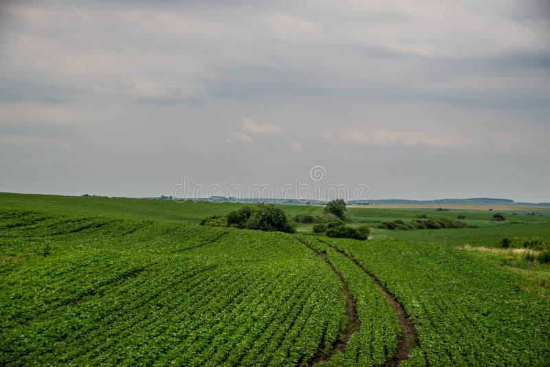 Traços de maquinaria agrícola no campo verde fotografia de stock royalty free