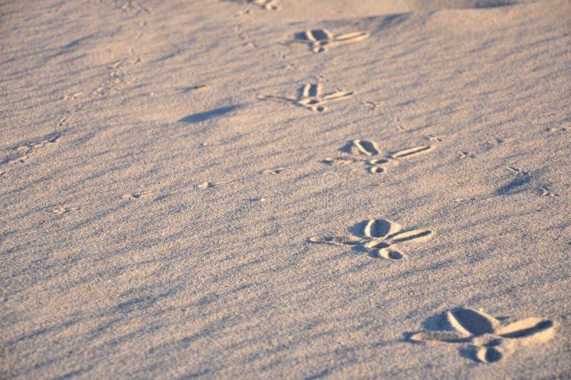 Traços de pássaros na areia fotos de stock royalty free