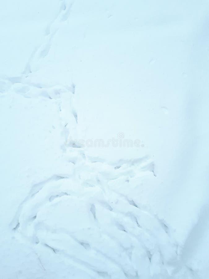 Traços de pássaros na neve fotos de stock