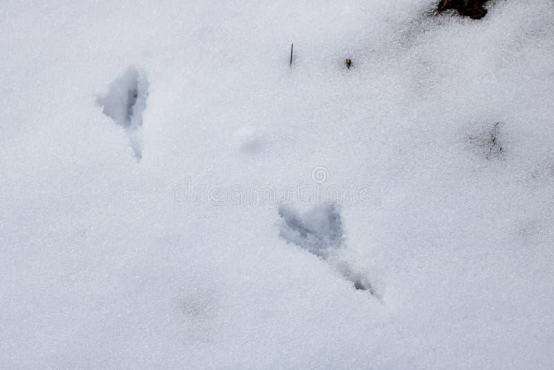 Traços de pássaros no fim da neve acima fotografia de stock