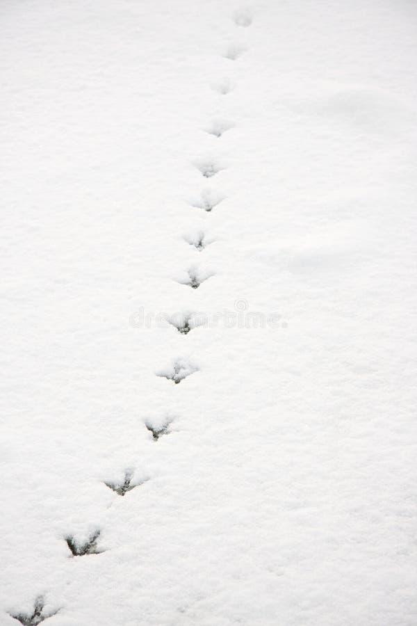 Traços de um pássaro na neve imagens de stock