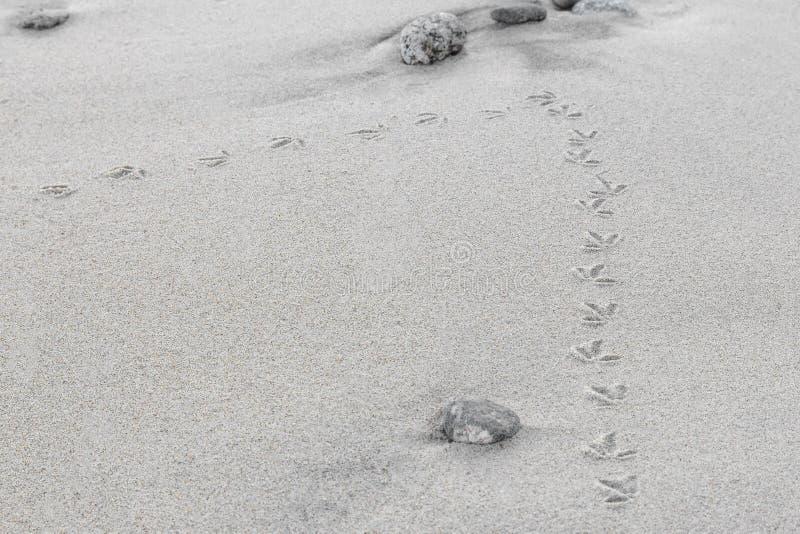 Traços de um pássaro pequeno na areia imagem de stock
