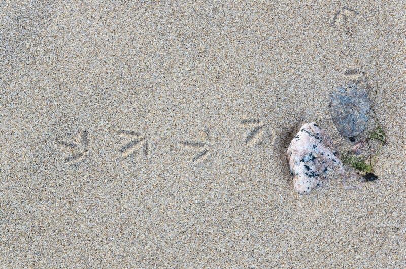 Traços de um pássaro pequeno na areia foto de stock