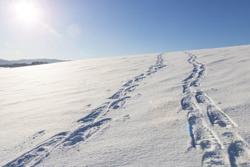 Traços na neve imagem de stock