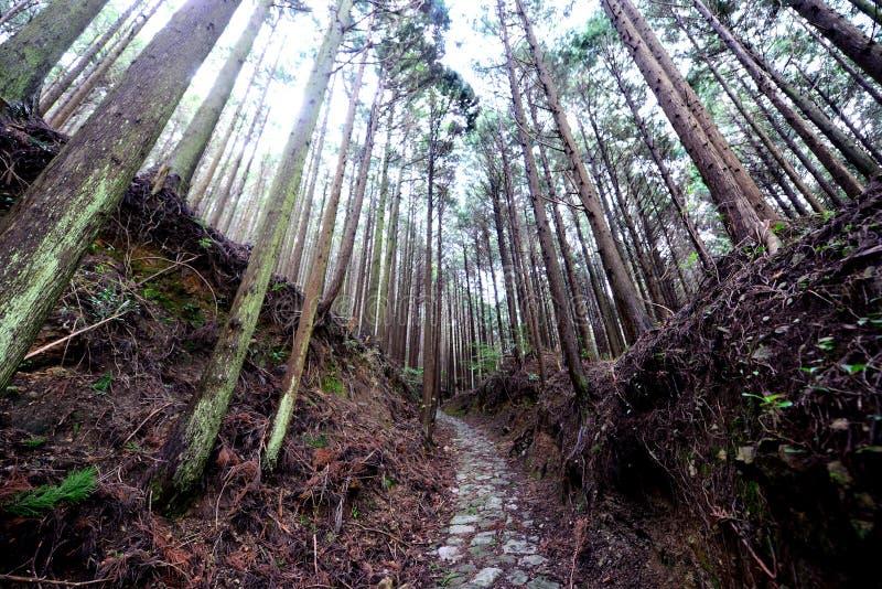 Traînée antique de pèlerin de Kumano Kodo photos stock