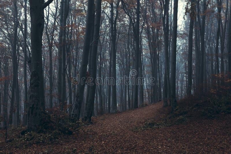 Traînée brumeuse foncée de forêt photos stock