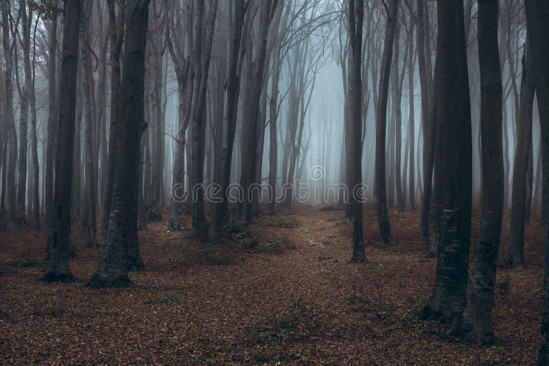 Traînée brumeuse foncée de forêt images libres de droits