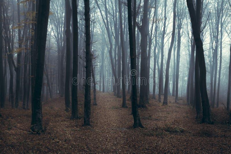 Traînée brumeuse foncée de forêt image libre de droits