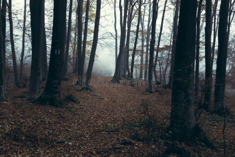 Traînée brumeuse foncée de forêt photo stock