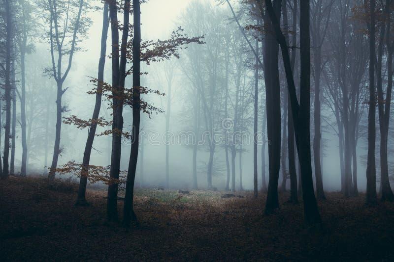 Traînée brumeuse sombre foncée de forêt avec la lumière là-dessus photos libres de droits