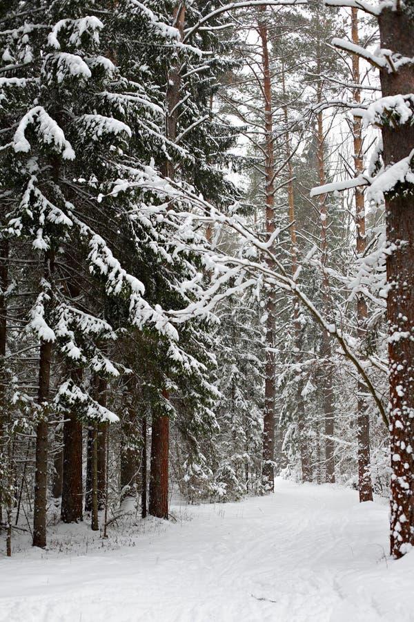 Traînée d'hiver photographie stock libre de droits