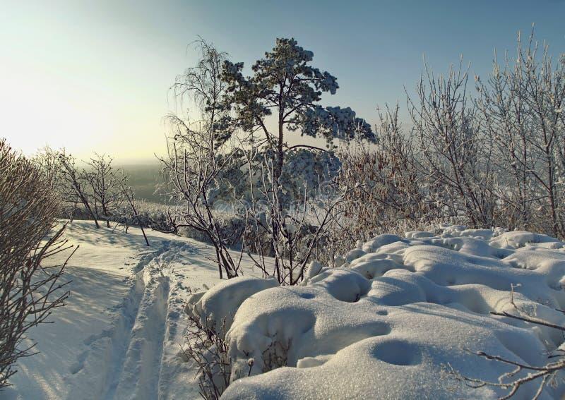 Traînée d'hiver le long des buissons et des arbres couverts de neige images libres de droits