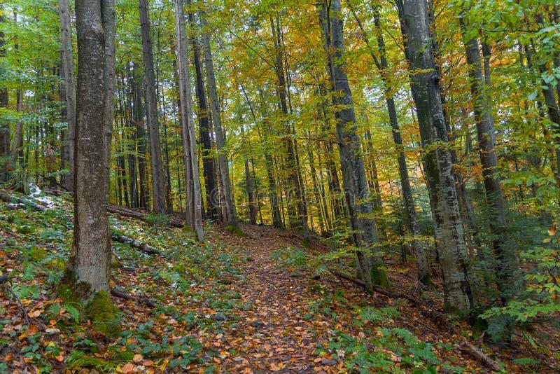 Traînée dans la forêt à feuilles caduques d'automne images stock