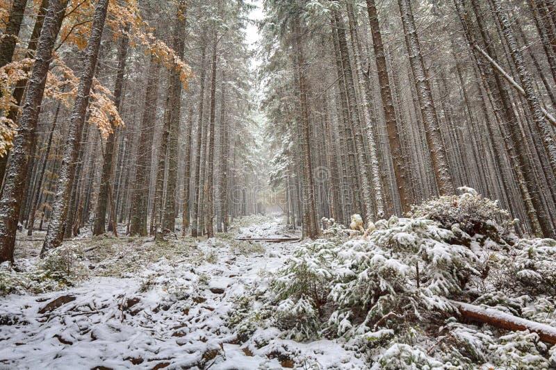Traînée dans la forêt à feuilles caduques neigeuse image stock