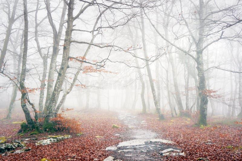Traînée dans la forêt brumeuse l'automne photographie stock