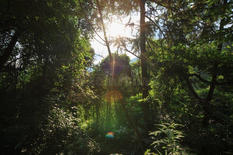 Traînée dans la forêt verte tropicale photographie stock libre de droits