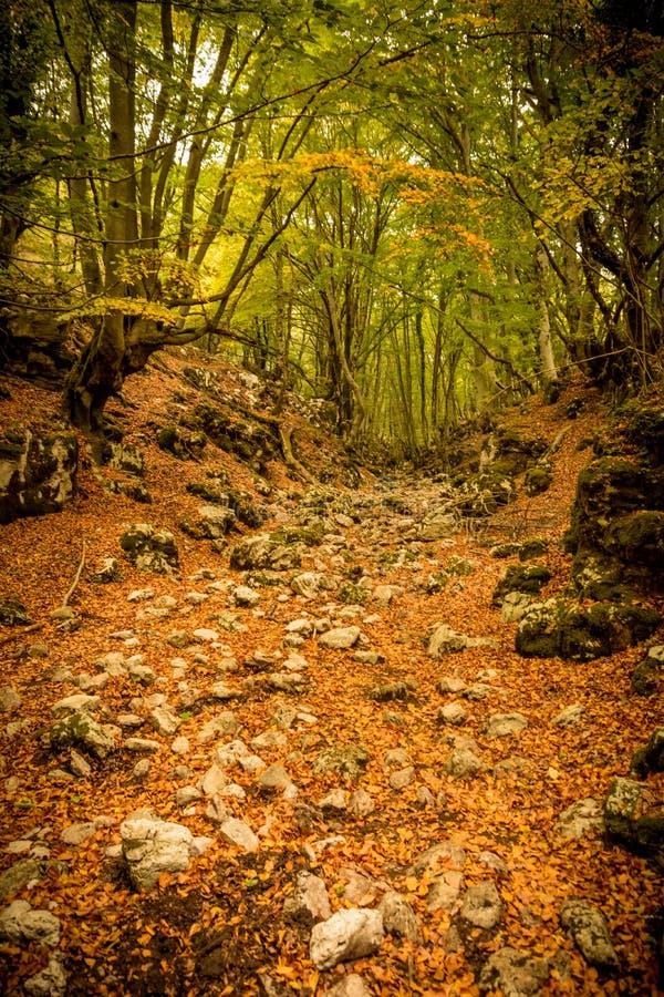 Traînée dans les bois en automne photos stock