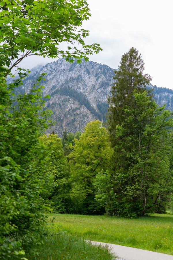 Traînée de chemin avec les pelouses vertes, passage couvert sur le champ d'herbe verte allant aux montagnes Hausse du chemin dans images libres de droits