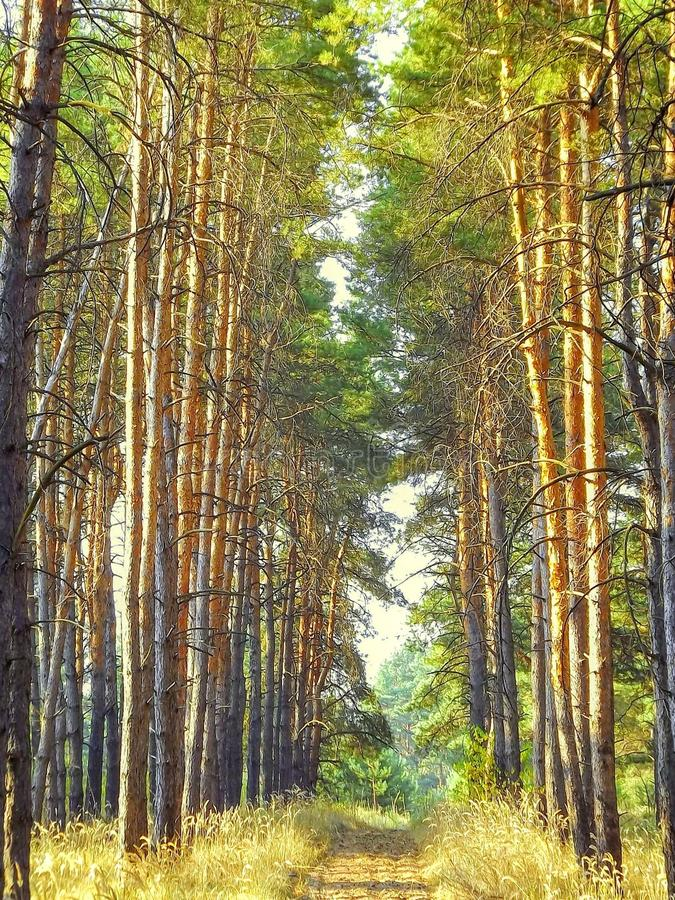 Traînée de forêt dans le bois de pin de matin photographie stock libre de droits