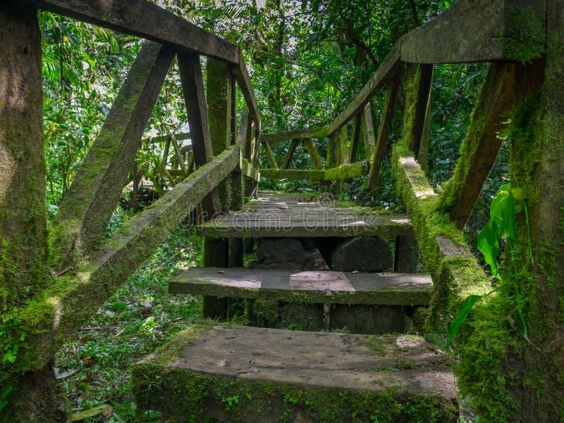 Traînée de jungle au Vulkan Mombacho photos libres de droits